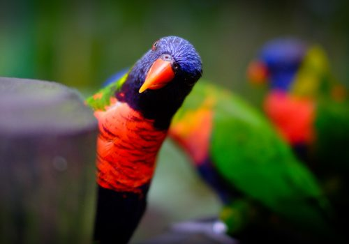 parrot peering at viewer with questioning look