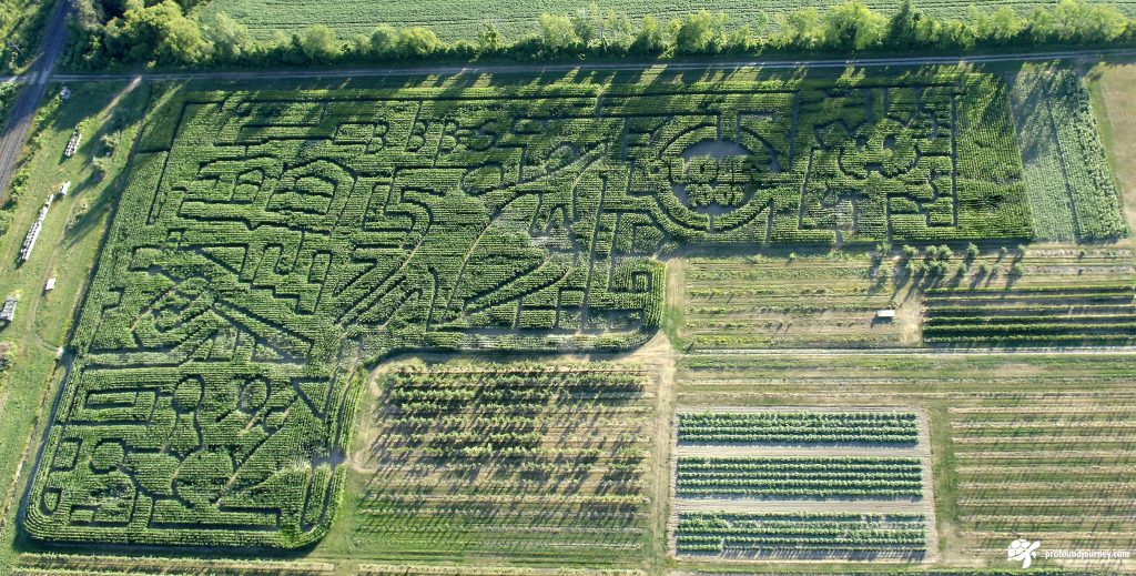 corn maze at Cricklewood Farm Brighton Ontario cut to theme of Big Brothers Big Sisters mentoring