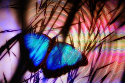 collage of blue butterfly on blurred colorized image of pond ripples with shadowy bullrushes superimposed