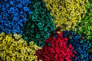 four masses of heavily coloured flowers - yellow, green, red and blue with emphasis on green and red for colour blind post