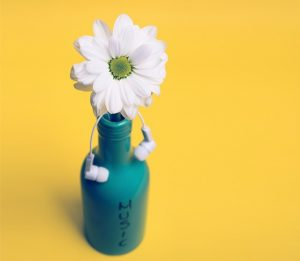 white daisy in green jug labeled 'music' with earbuds dangling from flower