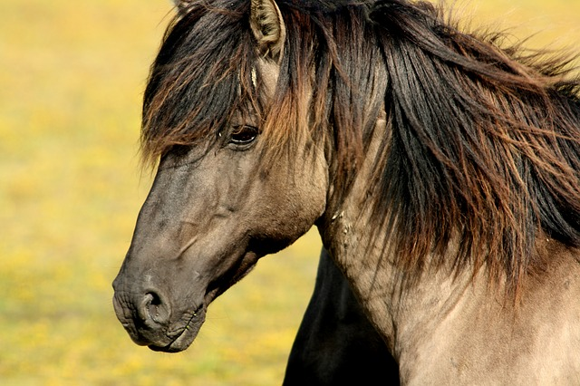 side view head and shoulders of brown horse