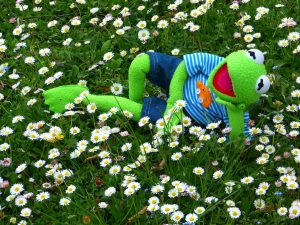 Kermit the frog relaxing in a field of daisies