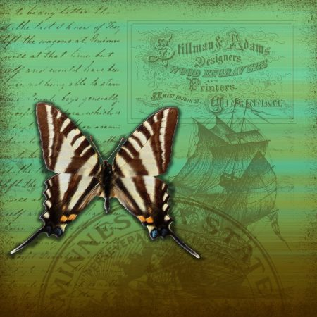 butterfly on scrapbook page background