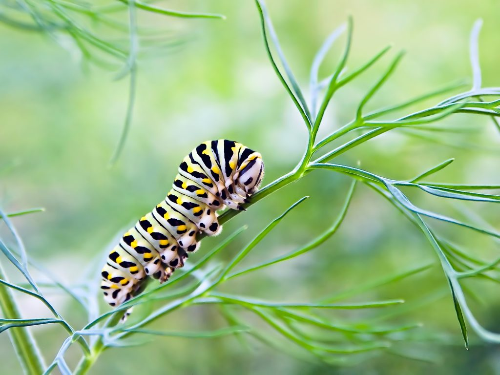 macro of caterpillar on branch