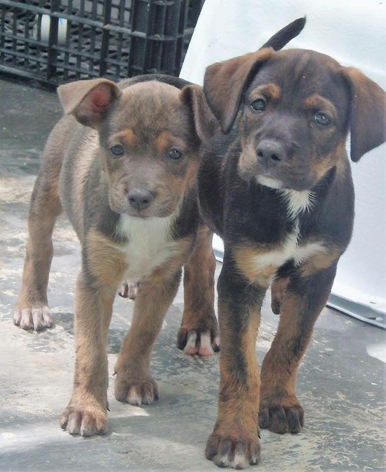 Two rescue puppies