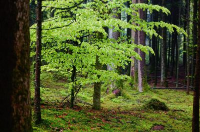 section of forest with moss and leafy tree