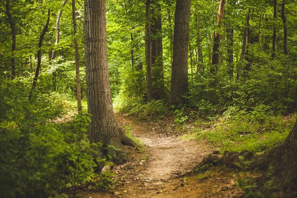 path through forest for a walk in the woods