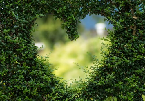 heart shape cut out of hedge, unfocused soft green scene beyond