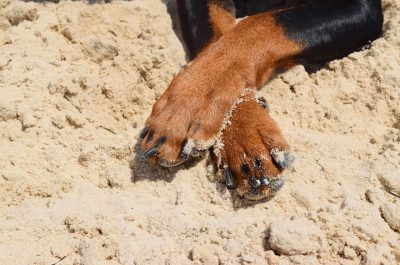 crossed dog paws on sand