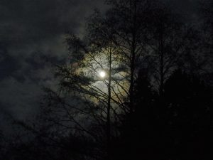 full moon in forest at night