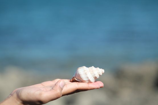 female hand holding seashell in front of blurred water and sand