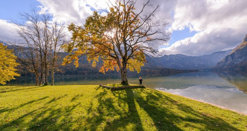 woman standing alone under tree looking out at water