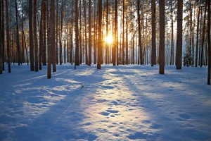 forest setting sun snow-covered ground