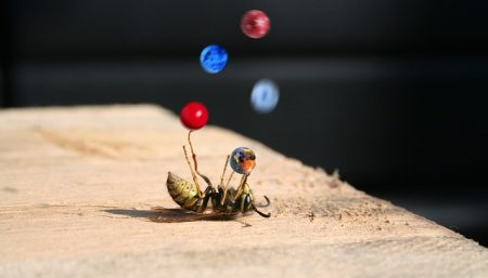 wasp on back juggling balls