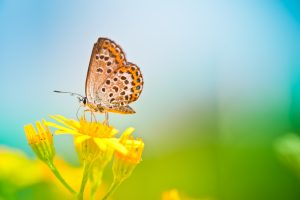 brown butterfly on yellow flower