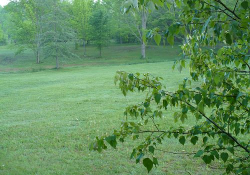 May is greening up grass and trees