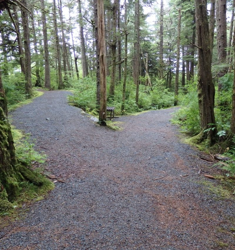 two roads diverging in woods