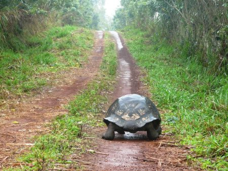 back of turtle as it walks along a path
